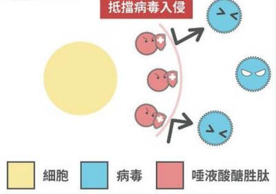 唾液酸抵制病毒入侵