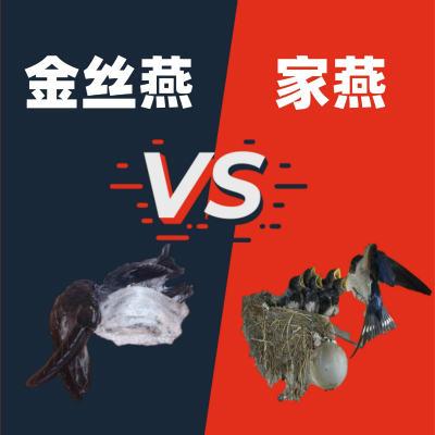 金丝燕vs家燕
