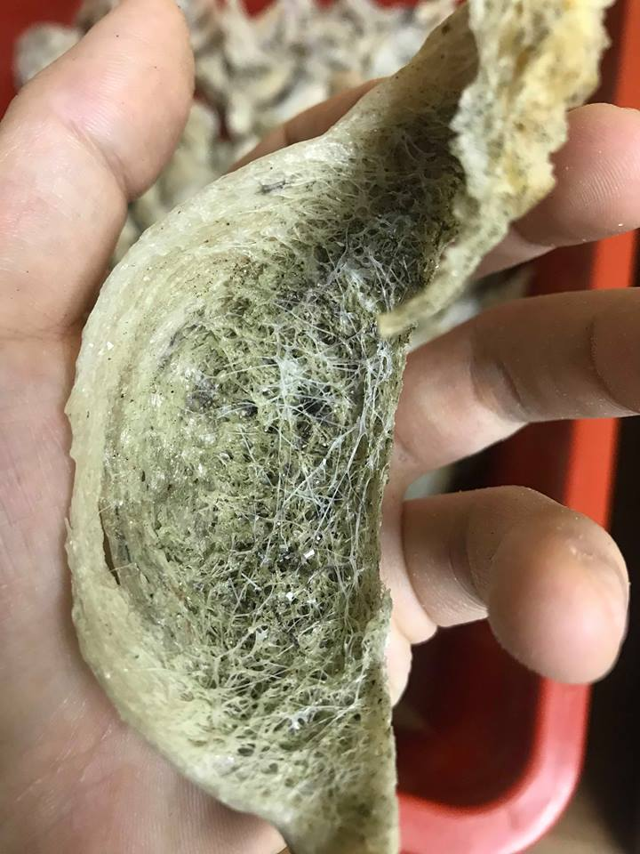 长了青苔的毛燕内部