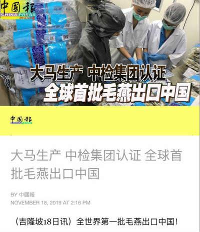 马来西亚全世界首批毛燕出口