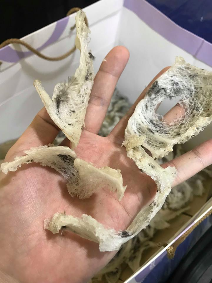 破裂与无燕盏形状的毛燕
