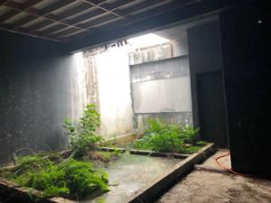 燕屋里的水池容易滋生蚊虫